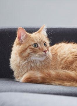 Cat in dedicated waiting room