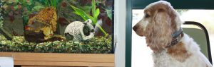 Dog looking at fishtank, Raddenstiles Veterinary Surgery